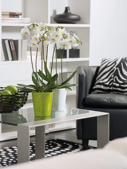 Saksije za orhideje