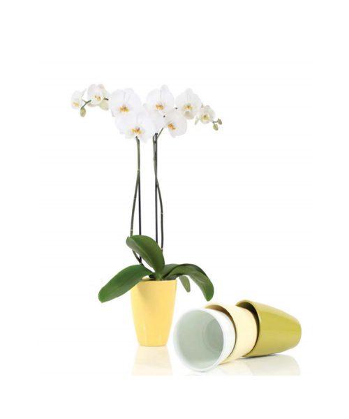 saksija za orhideje