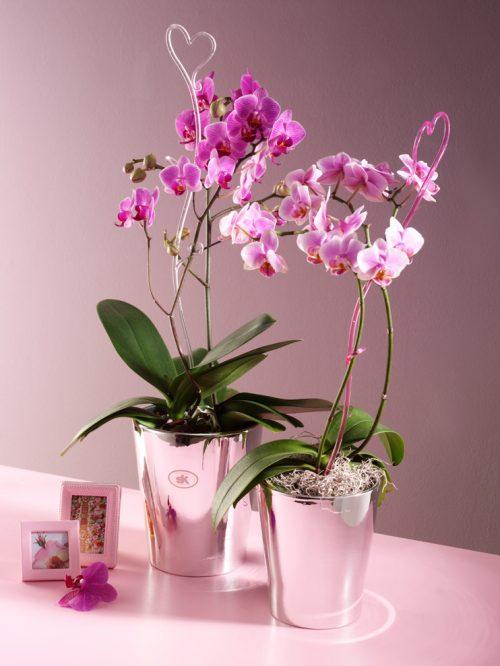 Merina metallic saksija za orhideju