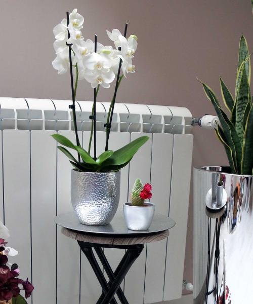 keramička saksija za orhideju